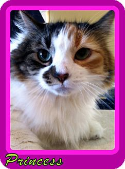 Calico Cat for adoption in Omaha, Nebraska - Princess