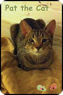 Domestic Shorthair Cat for adoption in Merrifield, Virginia - Pat the Cat
