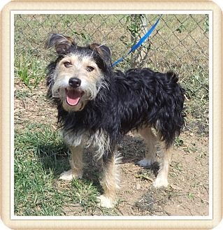 Terrier (Unknown Type, Small) Mix Dog for adoption in Marietta, Georgia - REX