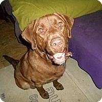 Adopt A Pet :: Harris - North Jackson, OH