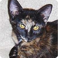 Adopt A Pet :: Chanel - Chandler, AZ