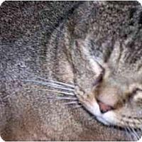 Adopt A Pet :: Moonface Melvin - cincinnati, OH