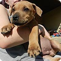 Adopt A Pet :: Rob - South Jersey, NJ