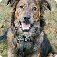 Adopt A Pet :: Tucker - Hagerstown, MD