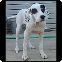 Adopt A Pet :: Roosevelt-ADOPTION PENDING! - Columbus, OH