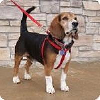 Adopt A Pet :: Hugo - Norman, OK