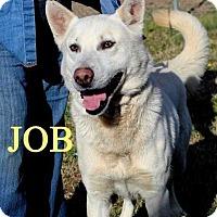 Adopt A Pet :: Job - Halifax, NC