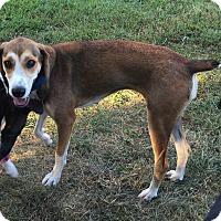 Adopt A Pet :: Lulu - Fredericksburg, VA