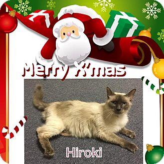 Ragdoll Cat for adoption in Harrisburg, North Carolina - Hiroki