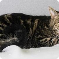 Adopt A Pet :: Willow (Cherry Hill PetSmart) - Blackwood, NJ