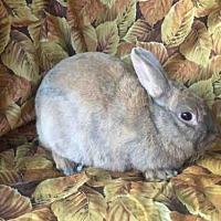 Adopt A Pet :: ROSA - Goleta, CA