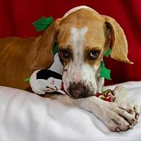 Adopt A Pet :: FELIX - BROOKSVILLE, FL