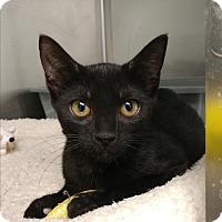 Adopt A Pet :: Olive - Umatilla, FL