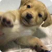 Adopt A Pet :: Barry - Mechanicsburg, PA