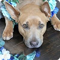 Adopt A Pet :: Ramona aka The Donkey - Los Angeles, CA