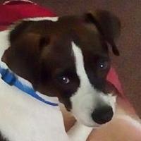 Adopt A Pet :: Flower - greenville, SC