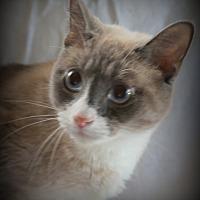 Adopt A Pet :: Winslow - Allentown, PA