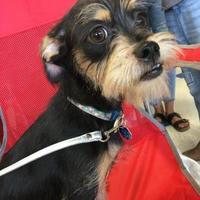 Adopt A Pet :: Terra - justin, TX