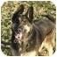 Photo 1 - German Shepherd Dog Dog for adoption in Las Vegas, Nevada - Kayser
