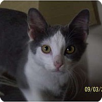 Adopt A Pet :: Jonathon - Cleveland, OH