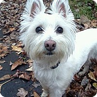 Adopt A Pet :: Katie - Hastings, NY