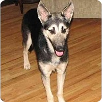 Adopt A Pet :: Dylan - BC Wide, BC