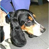 Adopt A Pet :: Tooker - Kingwood, TX