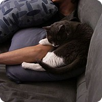 Adopt A Pet :: AERO - Phoenix, AZ