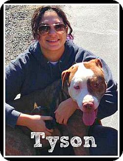 Pit Bull Terrier Mix Dog for adoption in Wantagh, New York - Tyson