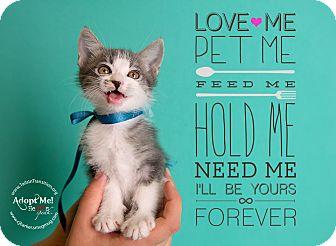 Domestic Shorthair Kitten for adoption in Friendswood, Texas - June