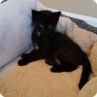 Adopt A Pet :: Carter - Turnersville, NJ