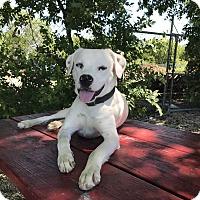 Adopt A Pet :: Bruno - Bandera, TX