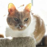 Adopt A Pet :: Otto - Rio Rancho, NM