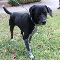 Adopt A Pet :: Sparky - Waco, TX