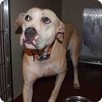 Adopt A Pet :: Panji - Newnan City, GA