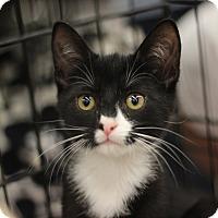 Adopt A Pet :: Valentine - Richmond, VA