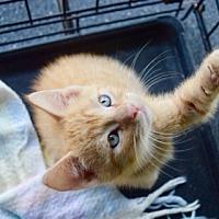Adopt A Pet :: Hippolyta - Hammond, LA