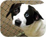 Beagle/Beagle Mix Dog for adoption in Beacon, New York - May