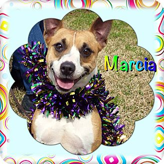 Chihuahua/Basenji Mix Dog for adoption in San Leon, Texas - Marcia