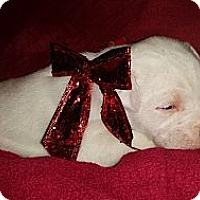 Adopt A Pet :: Opal - Roaring Spring, PA