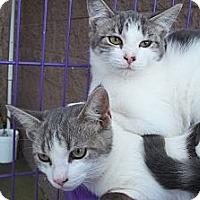 Adopt A Pet :: Grayson - Acme, PA