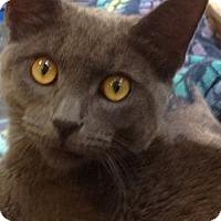 Adopt A Pet :: Santino - Modesto, CA