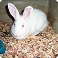Adopt A Pet :: Ruby Rose - Little Rock, AR
