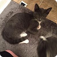 Adopt A Pet :: Lanai - McDonough, GA