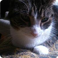 Adopt A Pet :: Jillian - london, ON