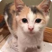 Adopt A Pet :: Sammy - East Hanover, NJ