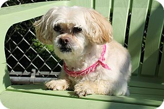 Poodle (Miniature) Mix Dog for adoption in Atmore, Alabama - Ella