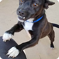 Adopt A Pet :: JIMMY - Hurricane, UT