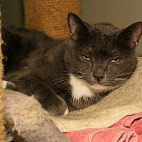 Adopt A Pet :: Apple Lily - Milford, MA