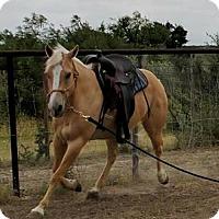 Quarterhorse for adoption in Del Rio, Texas - Maize